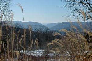 Gap:Winter:Grasses