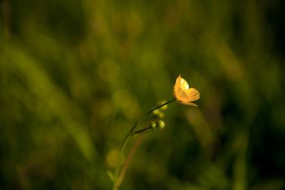 Lindsay flower small