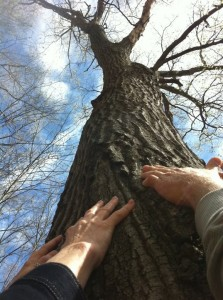 hands-on-tree